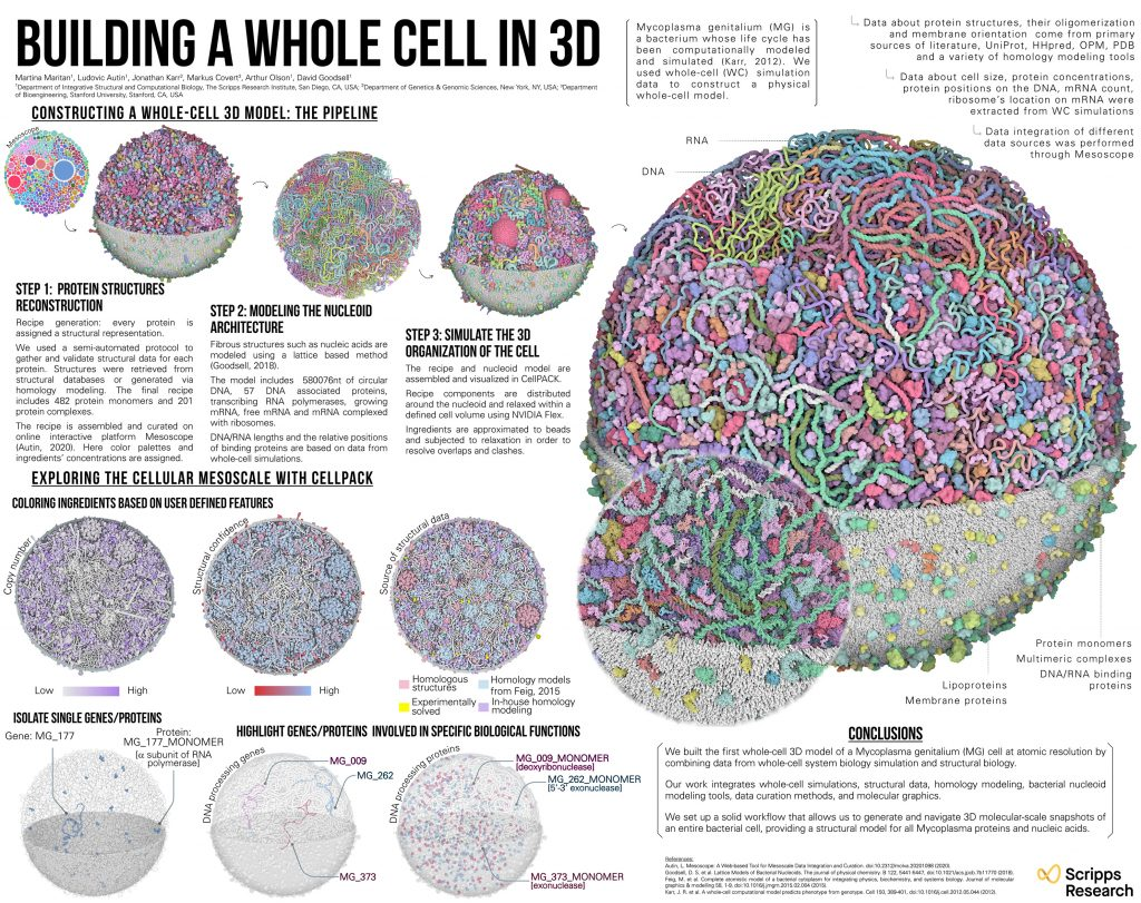 Building a whole cell in 3D