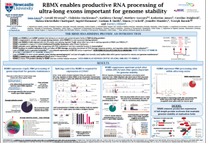 Poster RBMX enables productive RNA processing of ultra-long exons important for genome stability